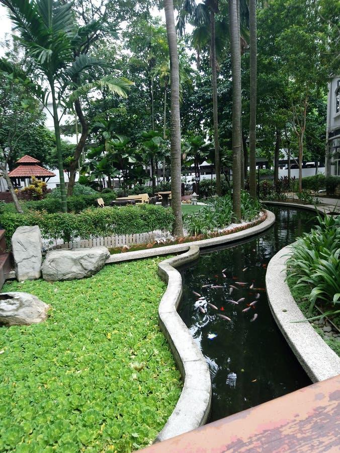 Parques recreacionais que dá o oxigênio foto de stock royalty free
