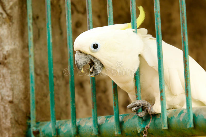 Download Parrot Stock Photo - Image: 13461250