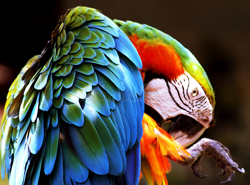 Download Parrot Stock Image - Image: 142161