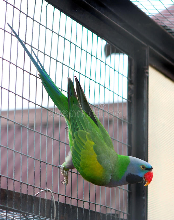 Free Parrot Royalty Free Stock Photo - 18537295