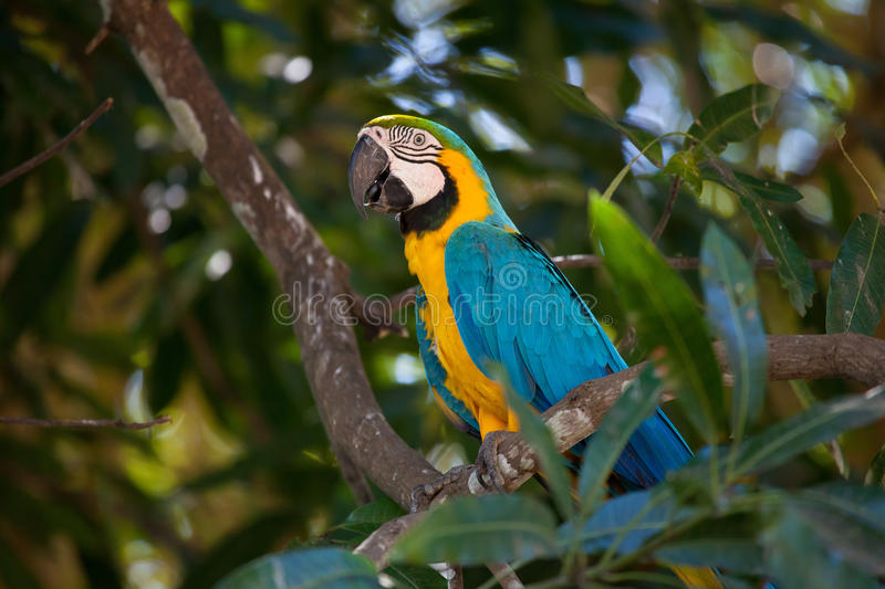 Download Parrot stock image. Image of parrot, animals, bird, blue - 18686837