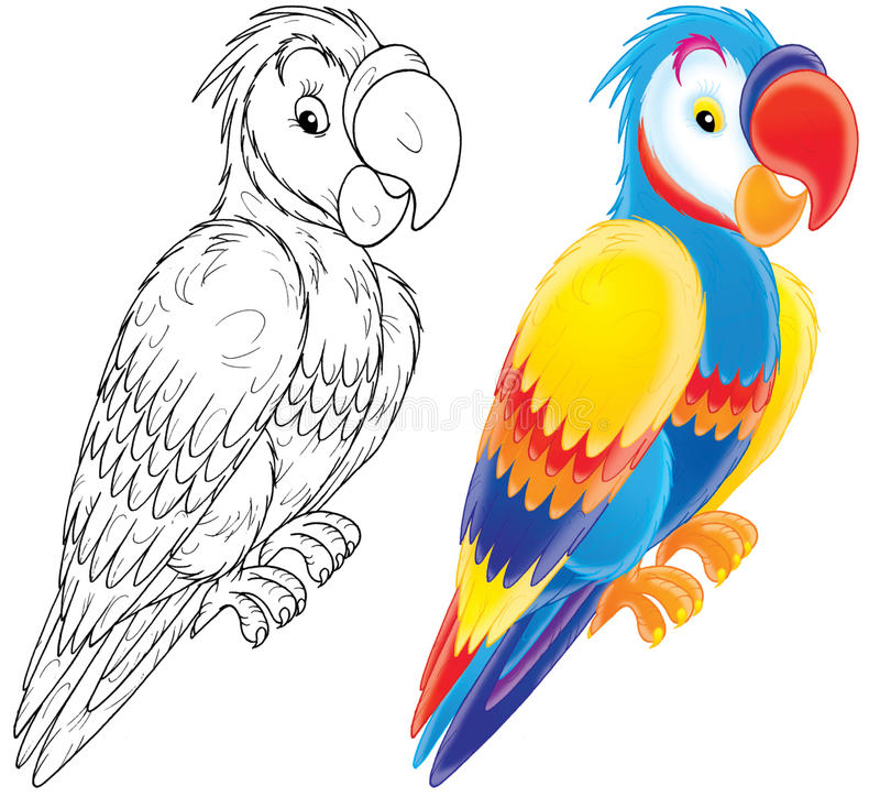 Free Parrot Royalty Free Stock Images - 19205559