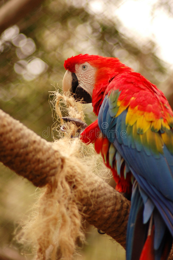 Free Parrot 2 Royalty Free Stock Photography - 191907