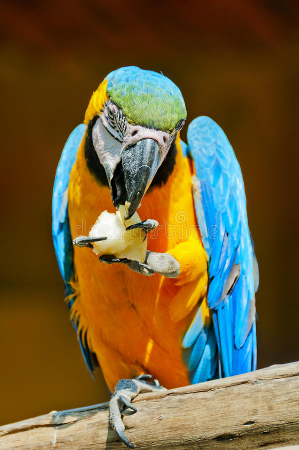 Download Parrot stock photo. Image of bright, macaw, close, color - 22199880