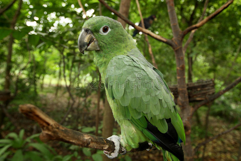 Download Parrot Stock Photos - Image: 23974953