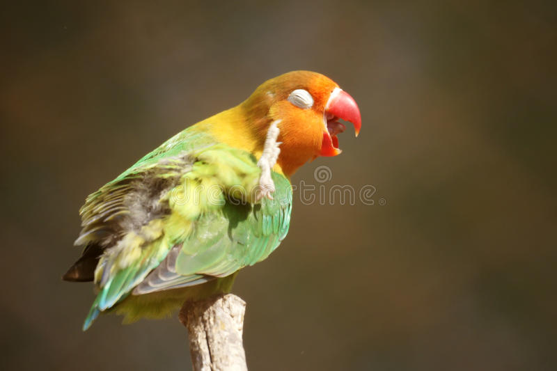 Download Parrot Stock Images - Image: 24484064