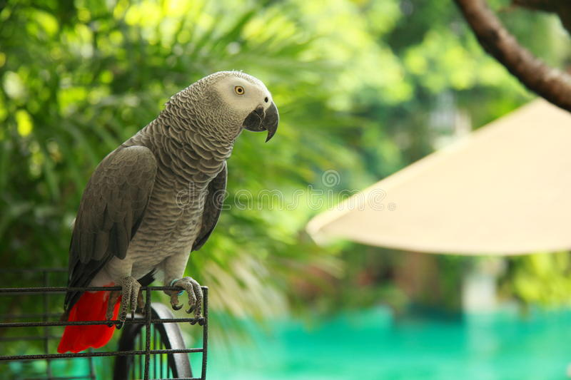 Download Parrot stock photo. Image of animal, america, australian - 24889734