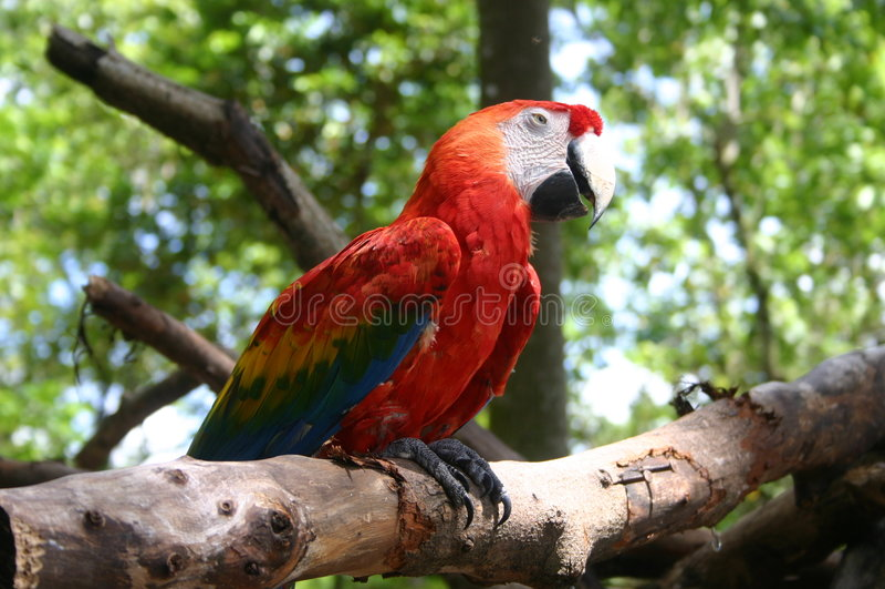Download Parrot stock image. Image of beak, fauna, bird, flora, claw - 28173