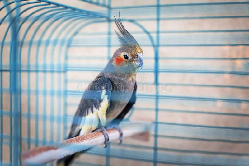 Parrot-2 стоковое фото rf