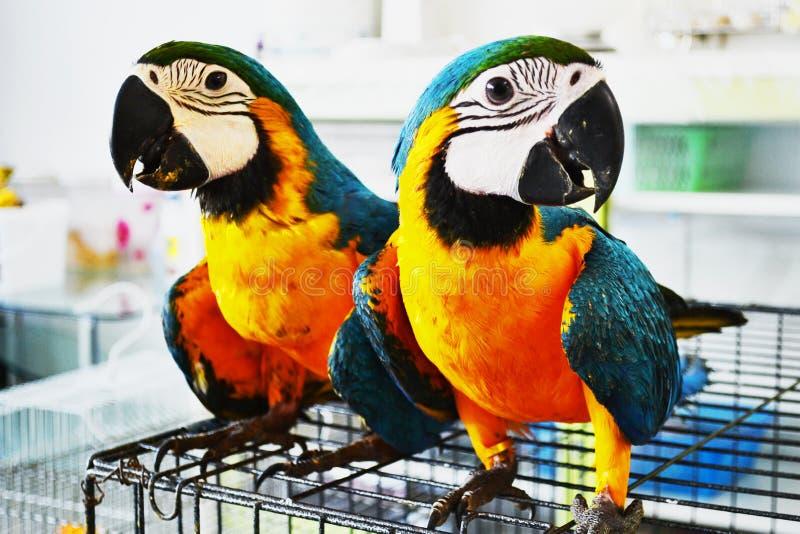 Parrot2 obrazy stock
