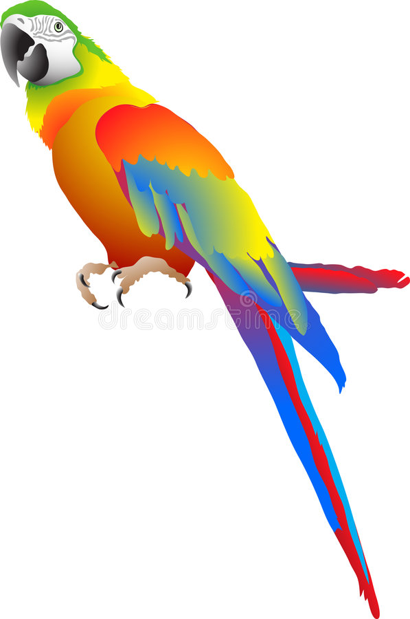 Free Parrot Stock Image - 4495791
