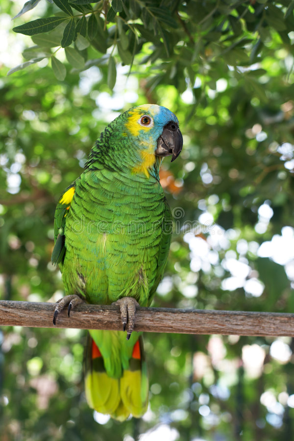 Download Parrot stock photo. Image of bright, leaf, domestic, portrait - 5815090