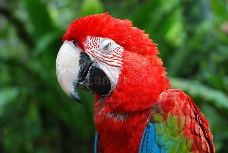 parrot στοκ φωτογραφίες με δικαίωμα ελεύθερης χρήσης