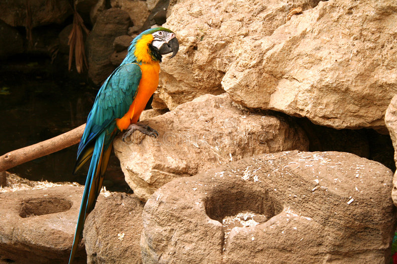 Download Parrot stock photo. Image of exotic, parrot, blue, rest - 7426612