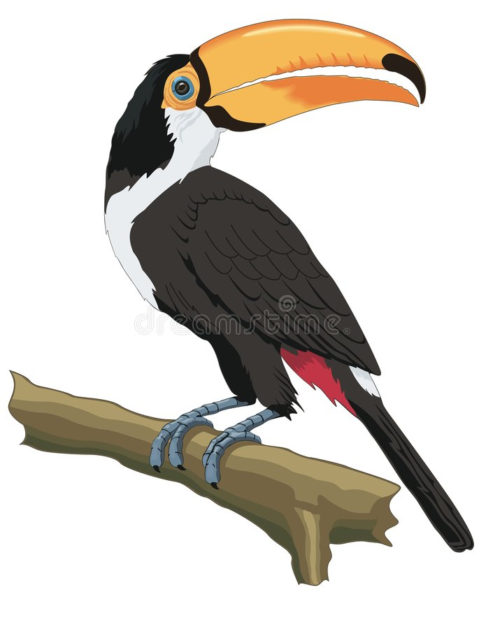 Download Parrot stock vector. Image of exotic, parrot, bushy, feather - 8380891