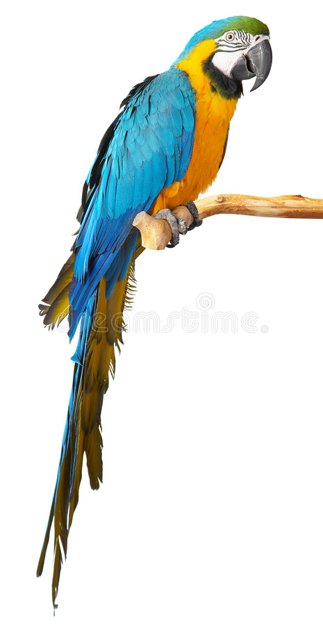 Free Parrot Stock Photography - 8793712
