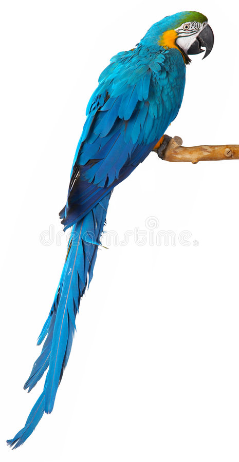 Free Parrot Stock Images - 8793714