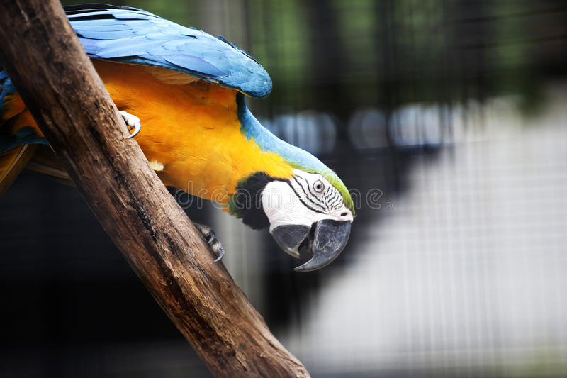 Parrot. Animal birds birds menagerie dickey volitant branch outdoors livestock pet stock image
