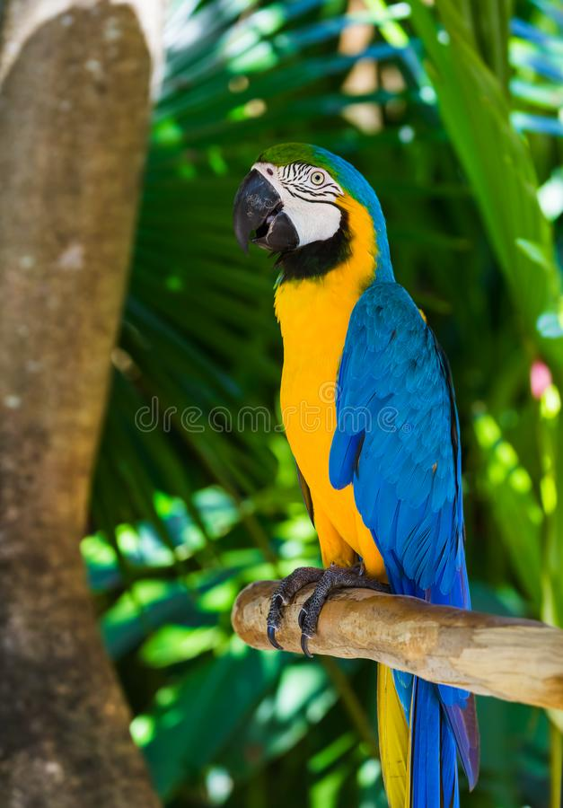 Parrot in Bali Island Indonesia. Nature background royalty free stock images