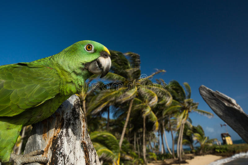 Parrot on the beach in front of palm trees royalty free stock photos