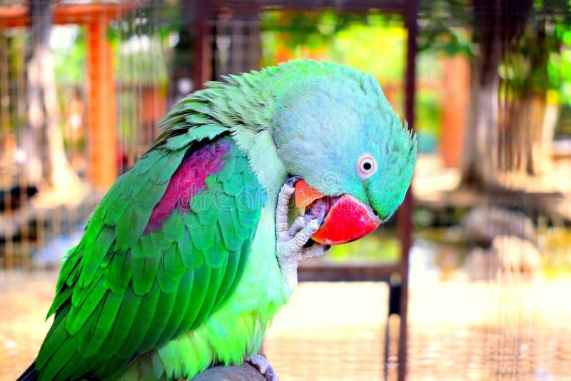 Parrot, Beak, Bird, Fauna stock photo