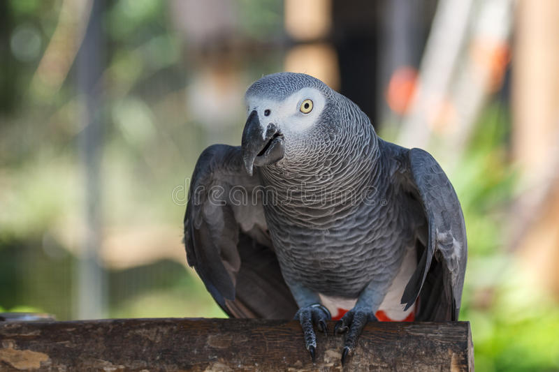 Parrot in the bird park on Bali royalty free stock photography