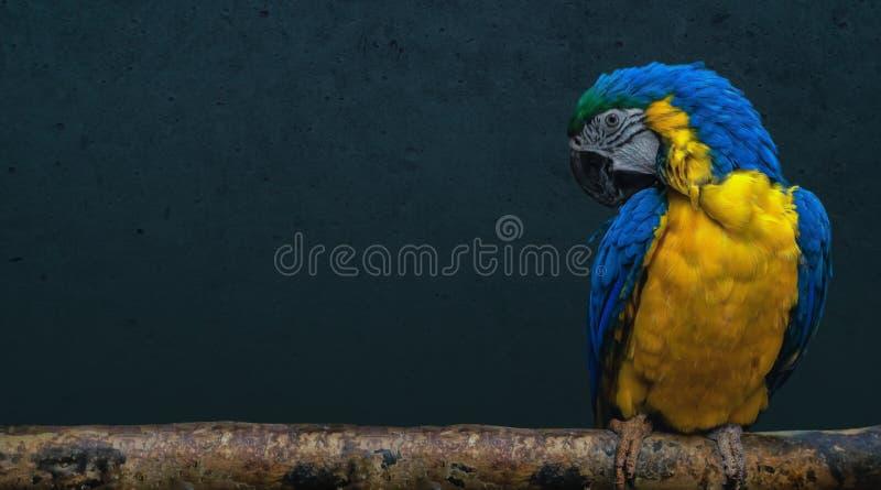 Parrot bird sitting on a branch. Australian parrot bird sitting on a wooden stick stock image