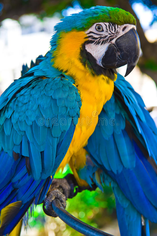 Parrot bird sitting on the perch royalty free stock photo