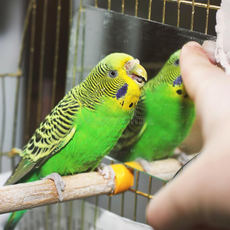 Bird Finger Stock Images - Download 2,992 Royalty Free Photos