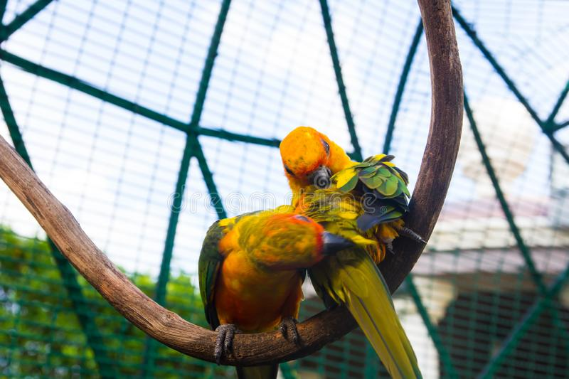 Parrot on a branch. Beautiful parrot on a branch royalty free stock photo