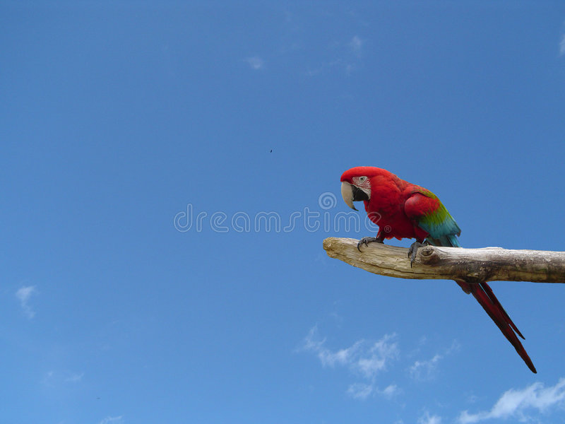 Download Parrot On A Branch stock image. Image of green, bird, caribbean - 6894385