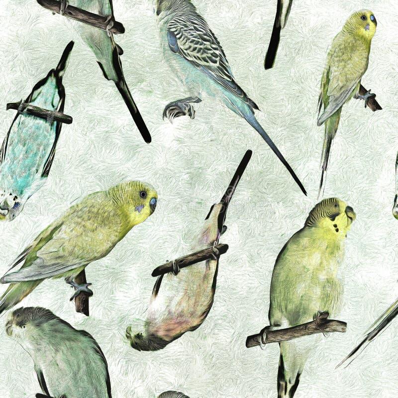Parrot budgerigar Melopsittacus undulatus seamless pattern.  vector illustration