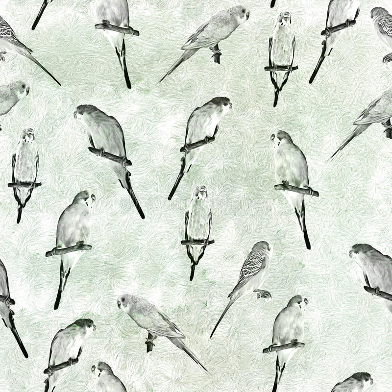Parrot budgerigar Melopsittacus undulatus seamless pattern.  royalty free illustration