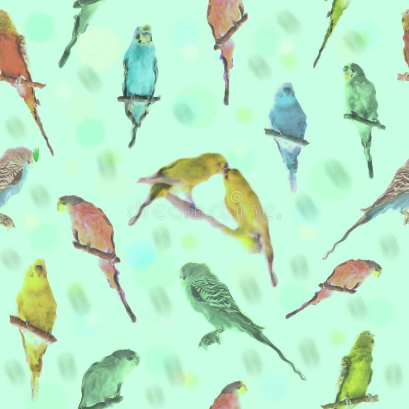 Parrot budgerigar Melopsittacus undulatus watercolor seamless pattern.  vector illustration
