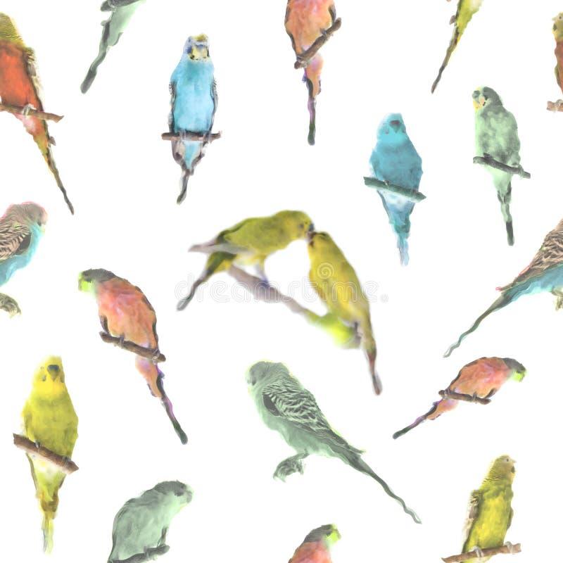Parrot budgerigar Melopsittacus undulatus watercolor seamless pattern.  stock illustration