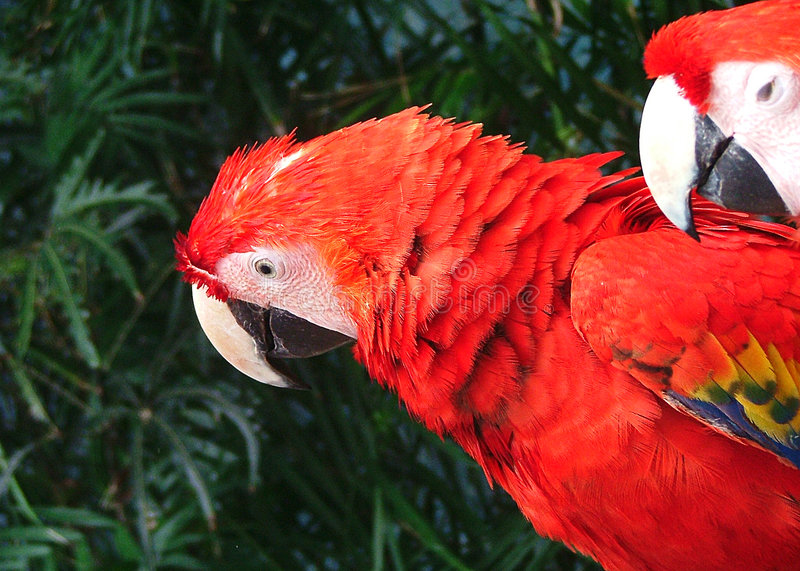 Download Parrot in cancun stock photo. Image of mexico, jungle, parrot - 110874