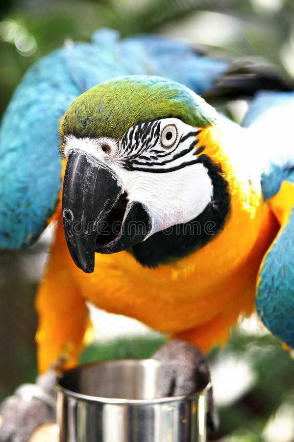 Parrot Close-up Stock Photo