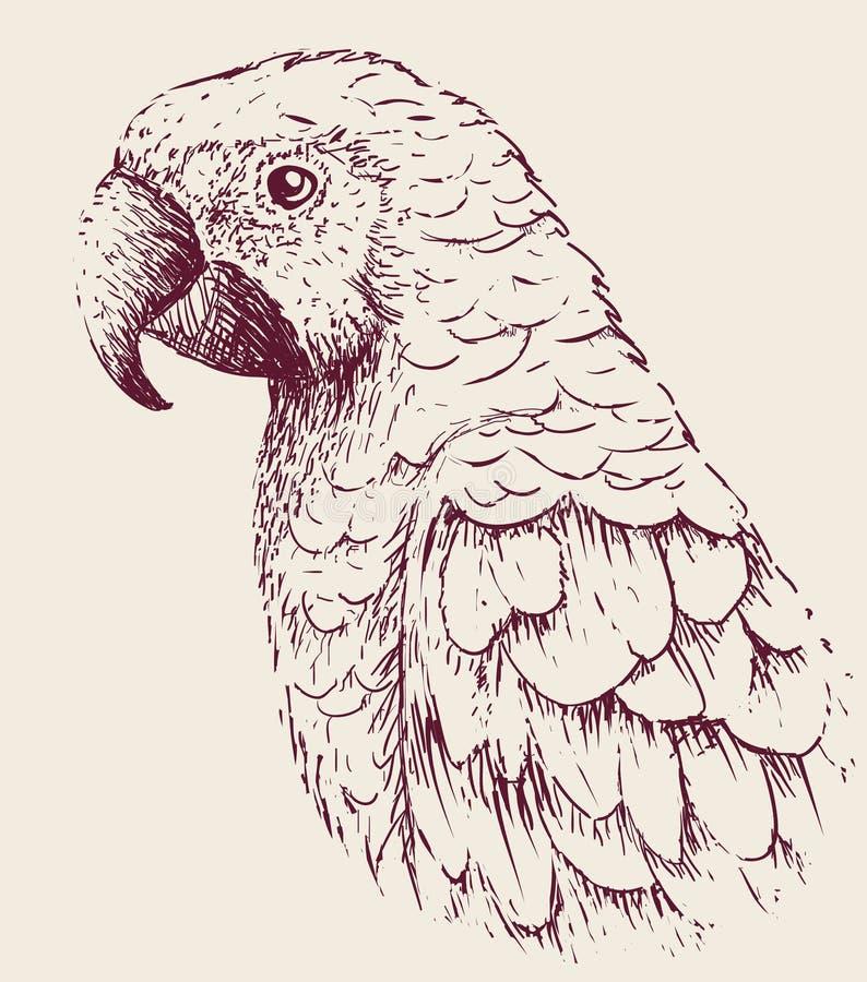 Parrot close up. Hand drawn work.Exotic bird.Vector illustration stock illustration
