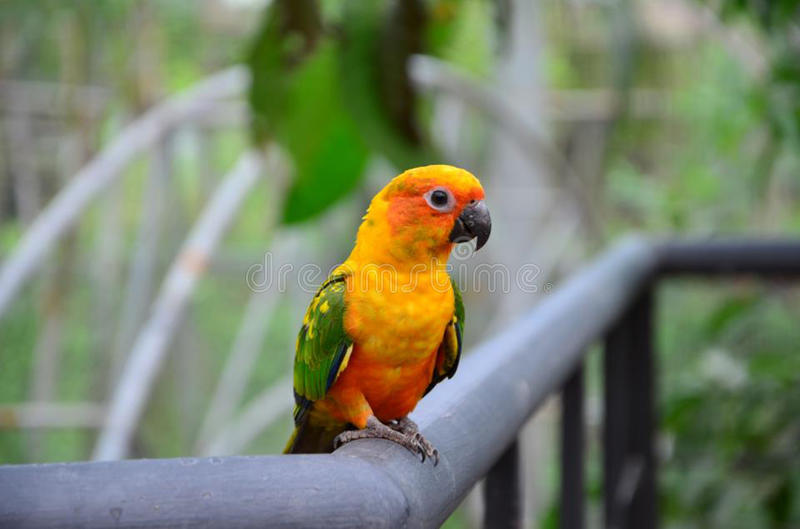 Parrot stock photos