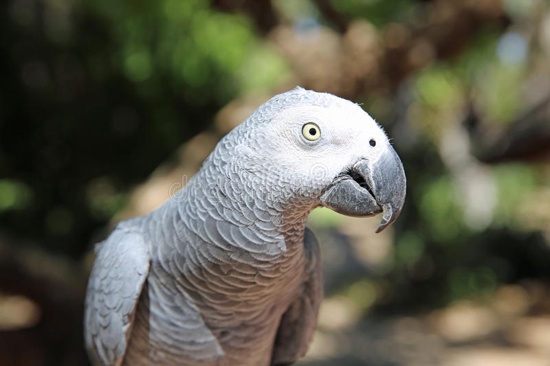 Download Parrot stock image. Image of imitator, bright, feather - 35064669