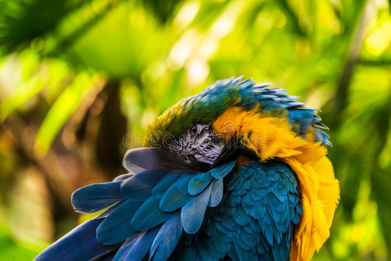 Parrot Exotic birds and animals in wildlife in natural setting stock photo