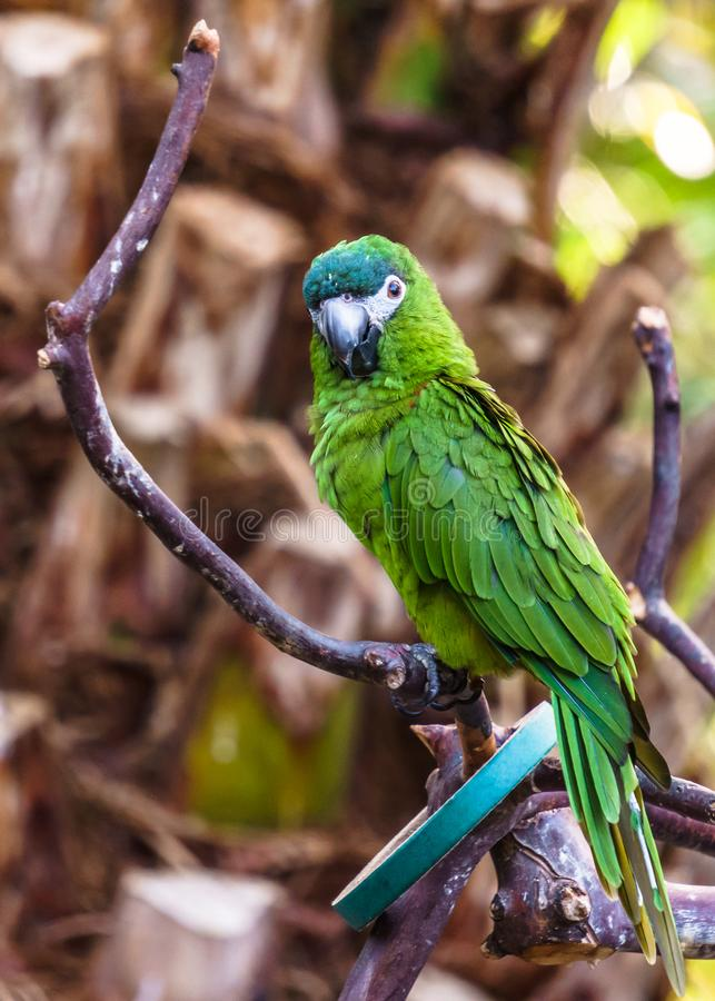 Parrot Exotic birds and animals in wildlife in natural setting stock photography