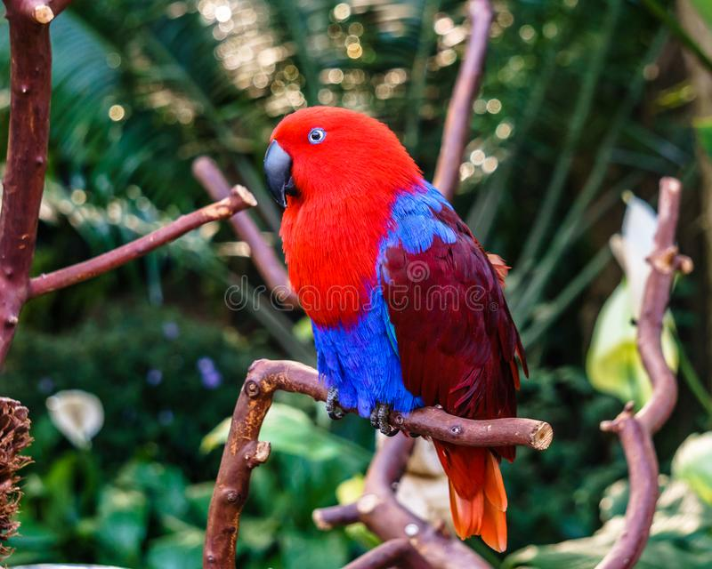 Parrot Exotic birds and animals in wildlife in natural setting royalty free stock image