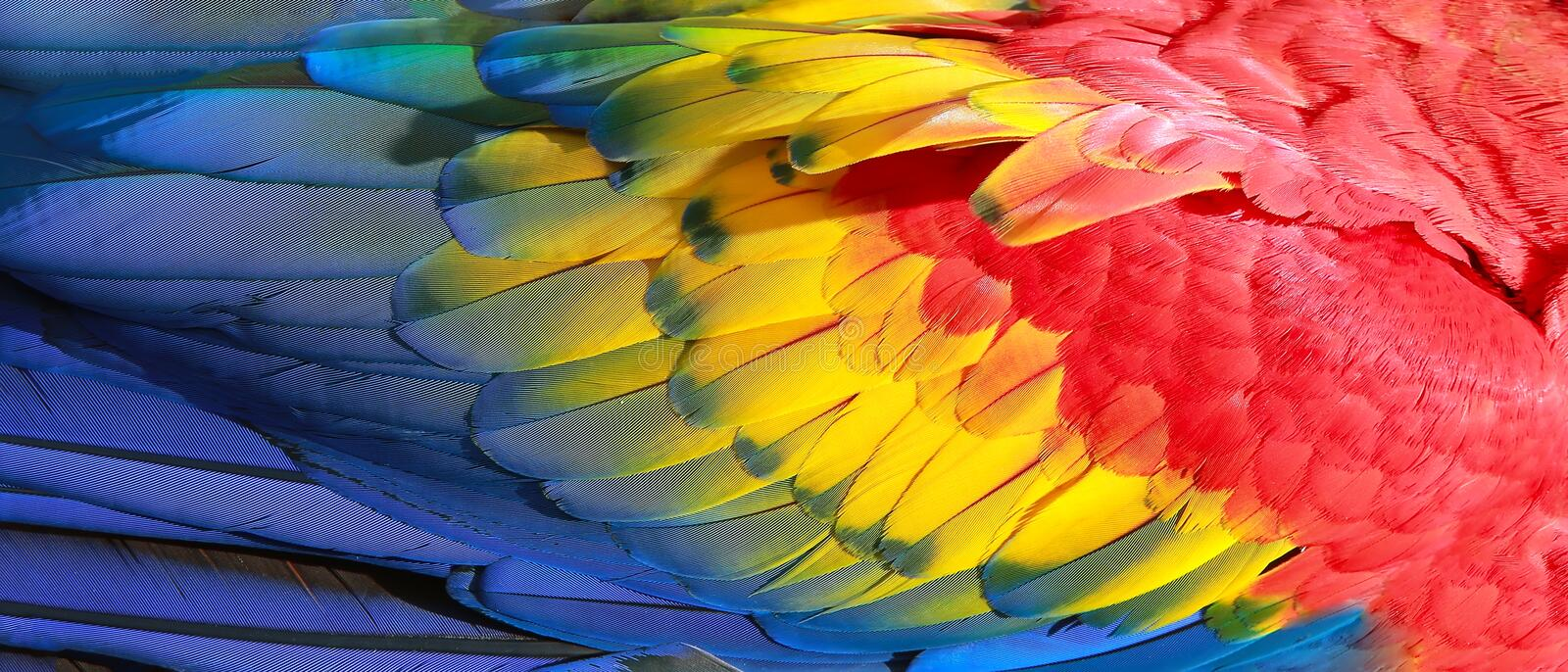 Parrot feathers exotic texture royalty free stock photography