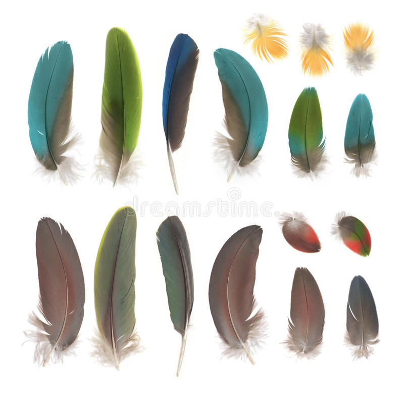 Parrot feathers. Isolated on white background royalty free stock photos