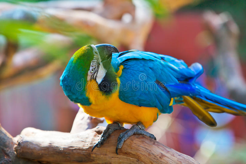 Download Parrot glance its back stock photo. Image of vigilant - 22299606