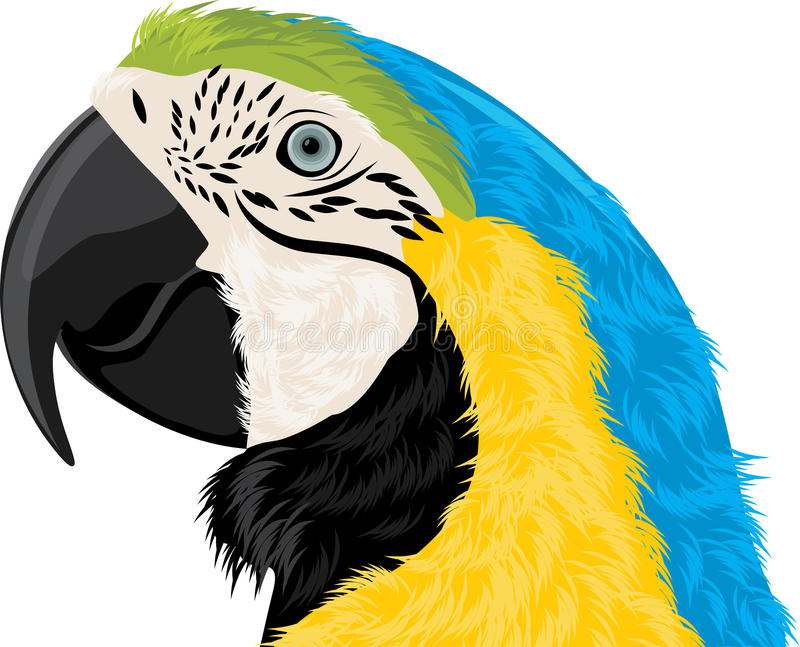 Download Parrot head stock vector. Illustration of parakeet, exotic - 28282050