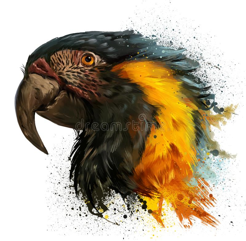 Parrot head and spray. Watercolor painting royalty free stock photos