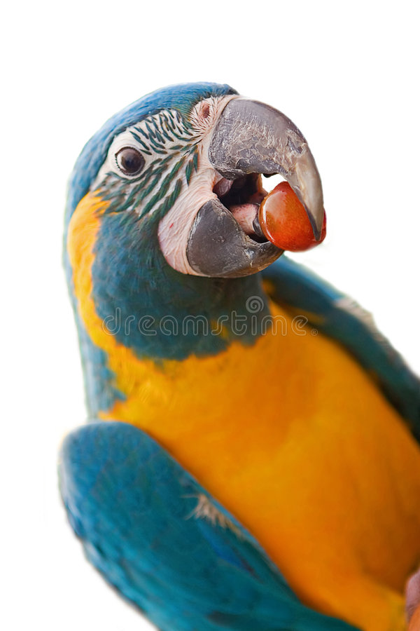Free Parrot Isolated On White Stock Images - 2882274
