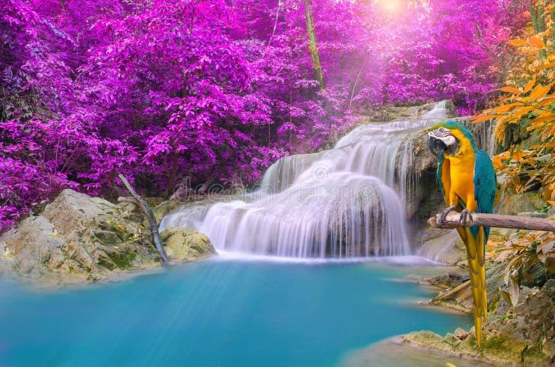 Parrot l'ara contre la cascade tropicale dans la forêt profonde photo stock